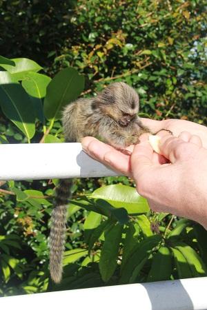 Это не игрушка, а живая обезьянка! Фото А. Алексеевой