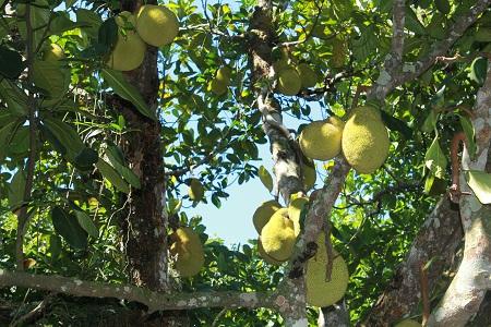 Экзотические фрукты. Фото А. Алексеевой