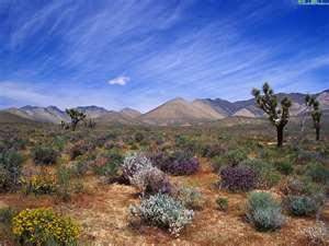 Пустыня всегда разная...