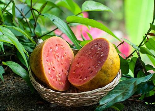 ГУАВА (guava)