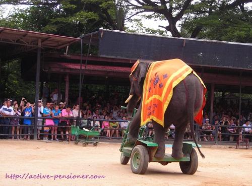 Шоу слонов.Парк Нонг Нуч. Паттая. (Elephant show.Nong Nooch. Pattaya.)