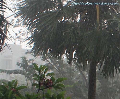 Тропический ливень (Tropical downpour)