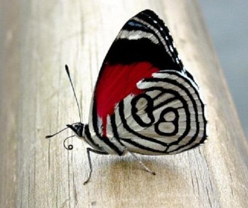 Тропическая бабочка ( a tropical butterfly)