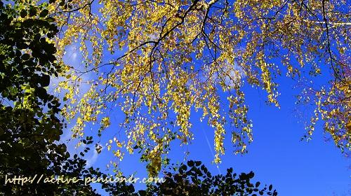 Осень. Листья. Небо.