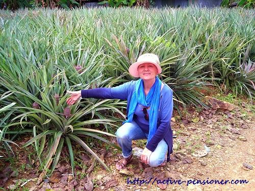 on  a pineapple plantation (на ананасовой плантации)