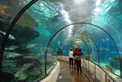 Подводный туннель (океанариум, Барселона)