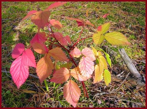 Осень - знатная художница!